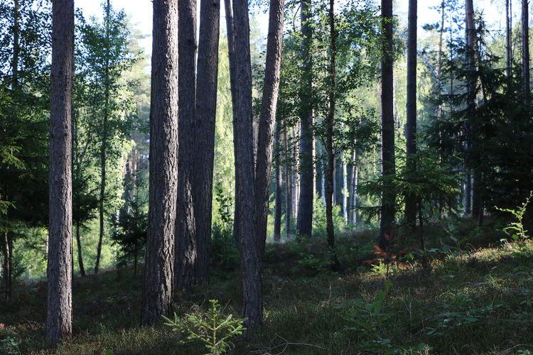 Bark Forrest