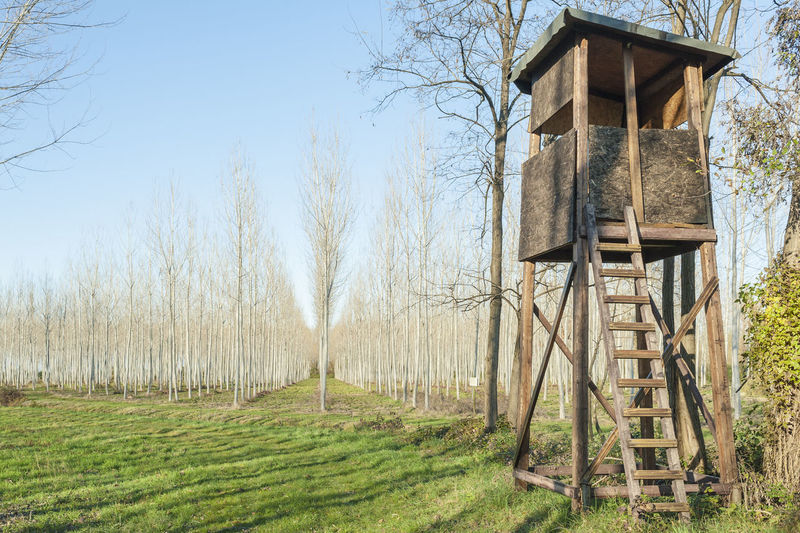 Raised shed hunting . Tower for hunt. Architecture Branch Built Structure Clear Sky Countryside Day Field Forest Grass Grassy Green Color Grove Hunt Hunting Nature No People Non-urban Scene Outdoors Poplar Scenics Shed Tower Tranquility Wood - Material