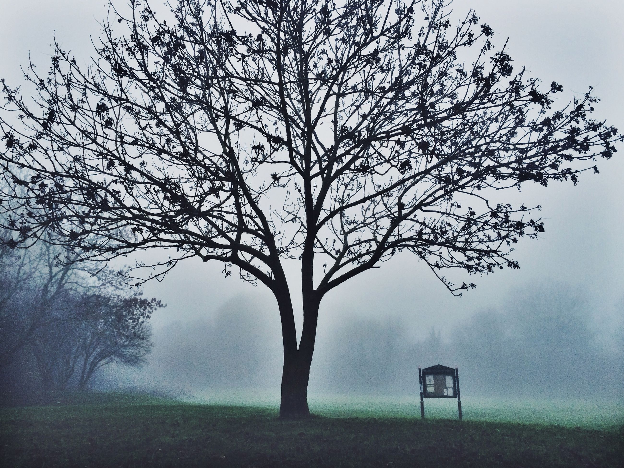 tree, bare tree, branch, tranquility, field, tranquil scene, nature, landscape, sky, fog, grass, beauty in nature, scenics, growth, foggy, tree trunk, day, fence, outdoors