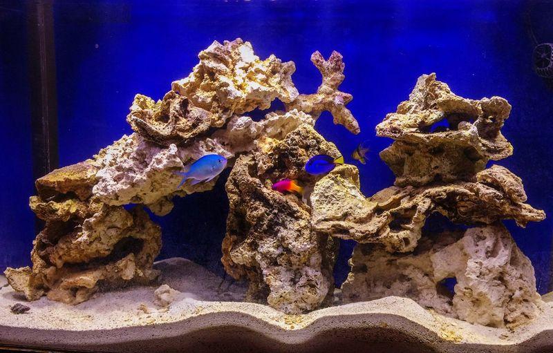 Saltwatertank Clownfish Bluetang Royal Gramma Pajama Cardinal my reef tank in the making