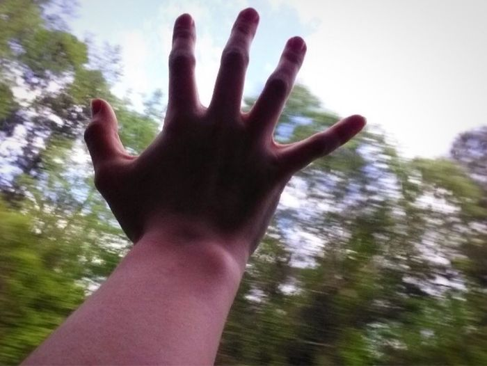 Human Hand Human Body Part Hand Real People One Person Body Part Personal Perspective Finger Human Finger Day Tree Lifestyles Leisure Activity Nature Touching