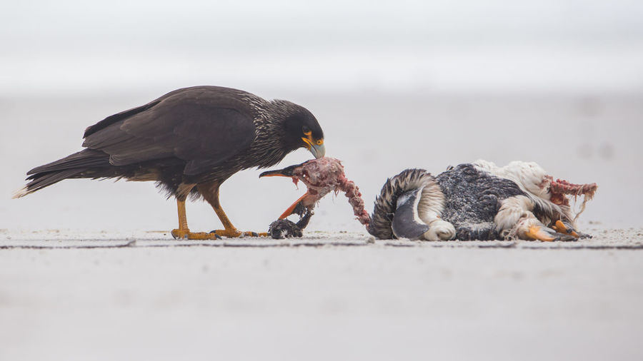 View of birds eating food