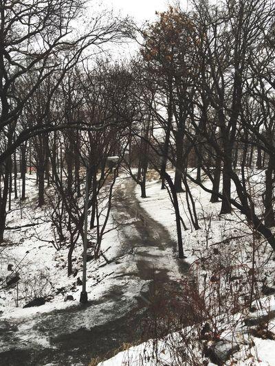Winter Grey Forest