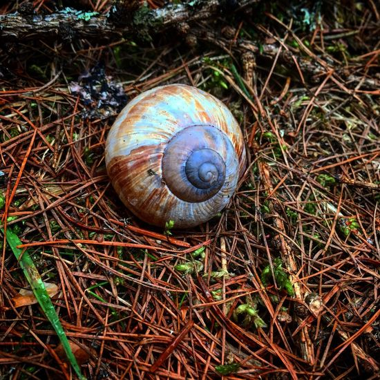 A shell I found in the woods, just off the track, when I lived in France as an au pair Snail Gastropod One Animal Wildlife Animal Shell Animal Themes Animals In The Wild High Angle View No People Nature Outdoors Day Fragility Close-up (null) WoodLand Colourful Your Ticket To Europe