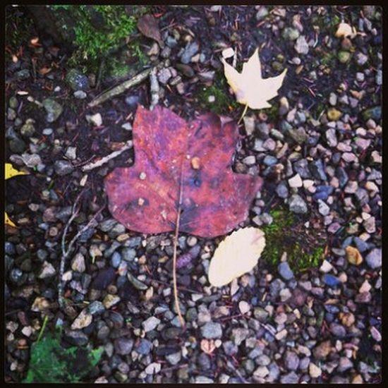 Fall Beauty Fall Leaves Fall Colors Leaves🌿 Leaves_collection Leaves Only Leaves Leavesporn