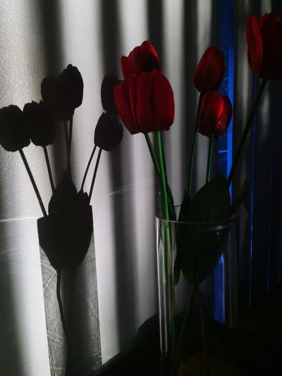 Close-up of tulips in vase at home