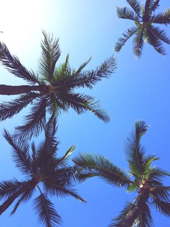 Hawaii Palm Trees Beach Nature Sky Waikiki Honolulu  NYE NYE2015 Trip Vacation