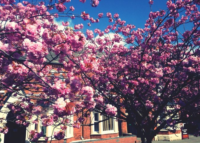 Spring Blossom Pantone Colors By GIZMON