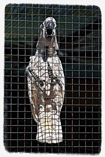 Birds Zoo