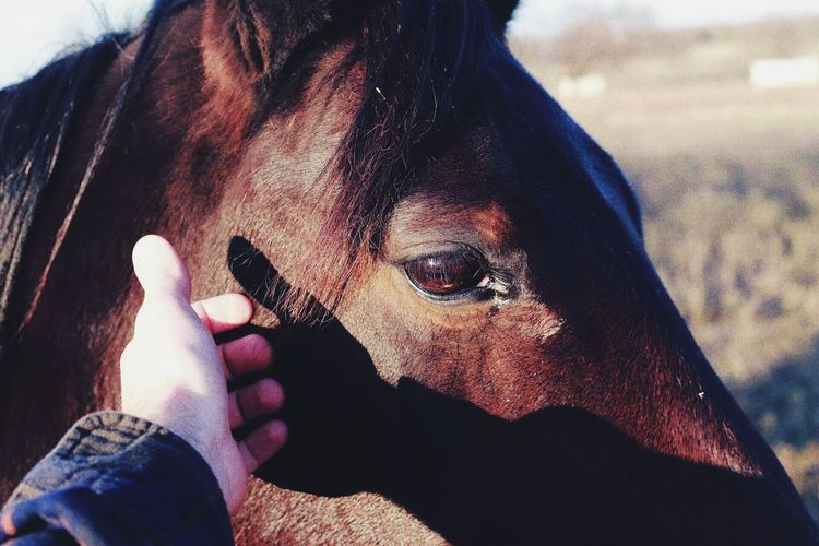 Cropped Image Of Hand Touching Horse On Sunny Day