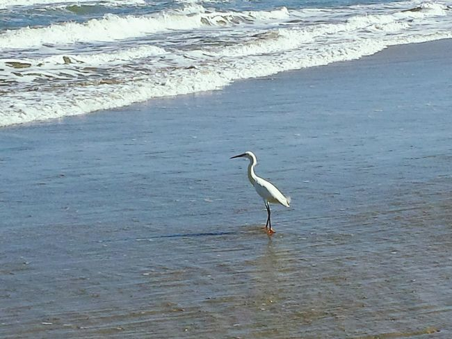 Beach Photography