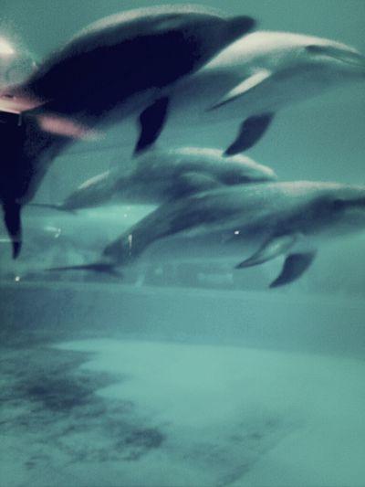 Dolphins Whale Aquarium