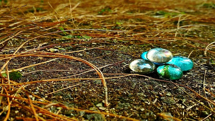 Grass No People Nature Close-up Outdoors Day Crocus Fragility Glass - Material Glass Art Crystal Clear Crystals Beautiful Colors Color Photography Colorful Sparkle Road Pleasure Illuminated EyeEmNewInHere Eyeemphotography Eyeem Photo EyeEmNewHere The City Light