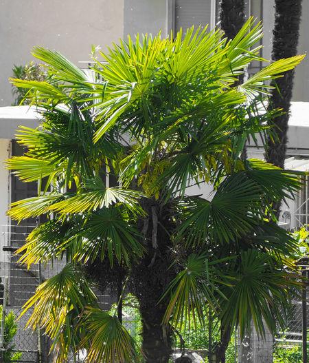 Close-up of palm tree