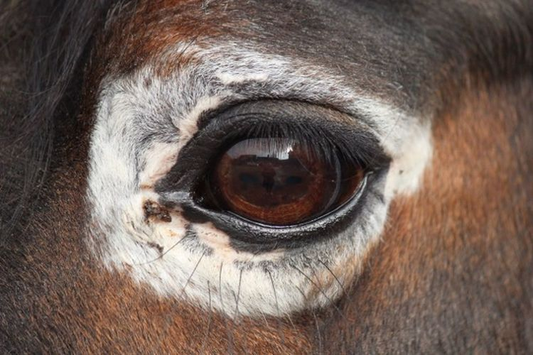 Animal Themes Animal One Animal Mammal Pets Domestic Domestic Animals Eye Horse