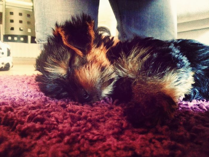 Beautiful Dog Sleep Cute