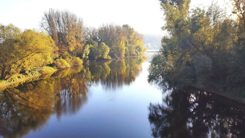 River RiverRhein Riverside Tree Nature No People Reflection Beauty In Nature Day Water Outdoors Scenics Close-up