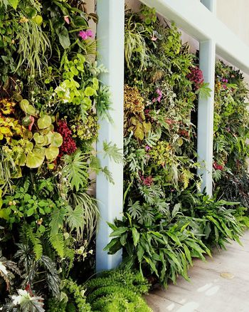 Vertical Garden Wallgarden Smallspaceliving Smallspace Garden Design Greens Greenery Mass Plants Flowers Crowded Greenhouse In A Row Red Butte Gardens Salt Lake City Utah House And Home Fresh on Market