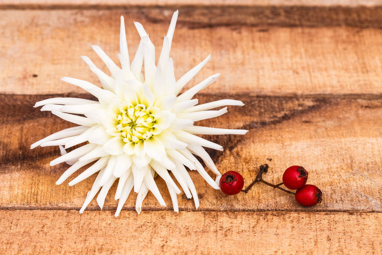 Close-up Dahlia Day Floral Photography Food Food And Drink Freshness Fruit Healthy Eating No People Outdoors