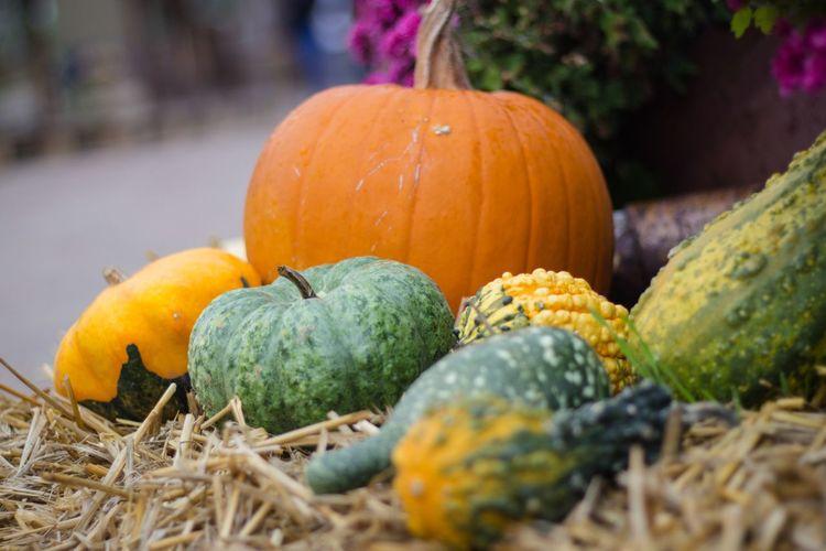 Herbstmarkt Pumpkins Herbst Kürbisse Orange Color Stroh Dekoration