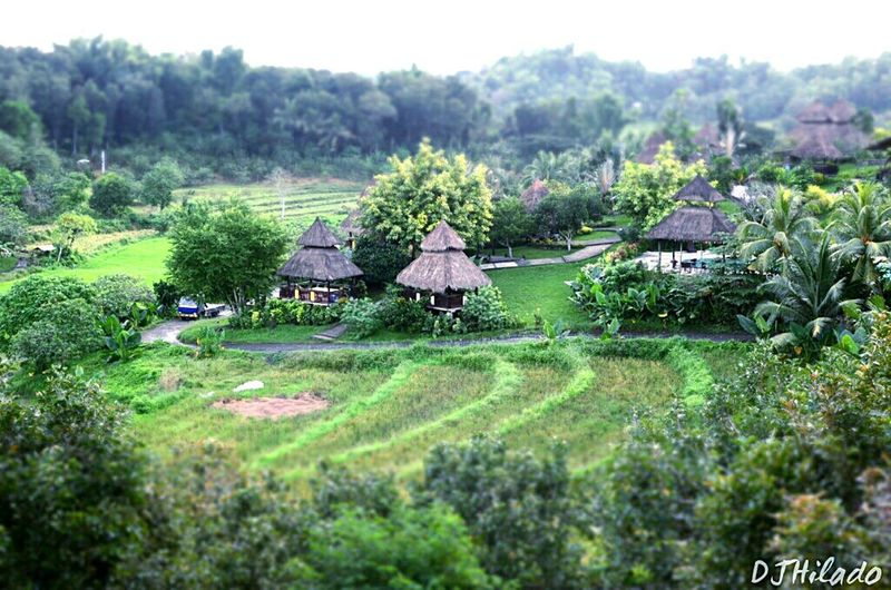 Damires Hills, Iloilo City Tranquility Landscape Outdoors Nature Miniatures Philippines ❤️