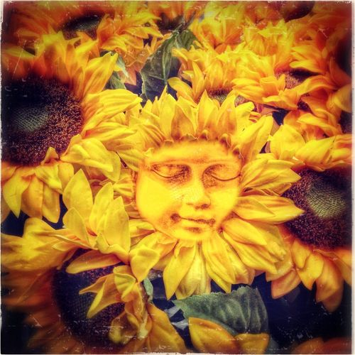 Bloom Blooming Blossom Close-up Face Flower Funny Nature Petal Plant Springtime Sunflower Sunflowers Sunny The Magic Mission Yellow Faces Faces Everywhere Unique Faces In Flowers Faces In Nature Faces In Things Faces In Objects Adapted To The City
