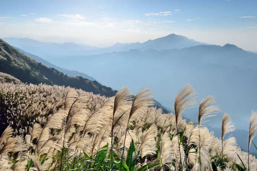 Autumn hill, open Manshan flowers, like snowflakes beautiful. Autumn Elegant Flowering Miscanthus Agriculture Beauty In Nature Broad View Day Fall Growth Landscape Mountain Mountain Flowers Mountain Range Nature No People Outdoors Plant Scenics Sky Sunny Weather Tranquil Scene Tranquility Wind Wire
