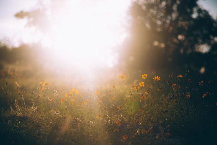 Flowering plants on field against bright sun