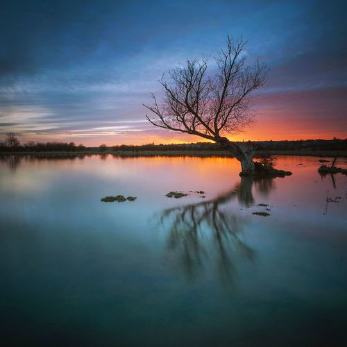 Bare tree on lake against cloudy sky during sunset