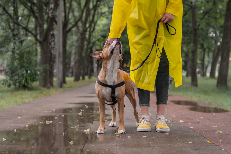 Low Section Of Woman With Dog Standing On Footpath At Park During Monsoon