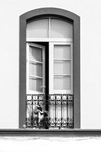 Alone EyeEm Best Shots EyeEm Nature Lover EyeEm Gallery Animal Themes Architecture Blackandwhite Blinds Building Exterior Built Structure Bw_collection Day Dog Domestic Animals French Balcony Mammal Mummy? No People Outdoors Pets Prospect Search Window