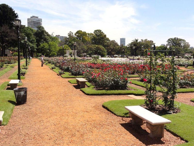 Enjoying The Sun Tadaa Community Taking Photos Roses Public Garden