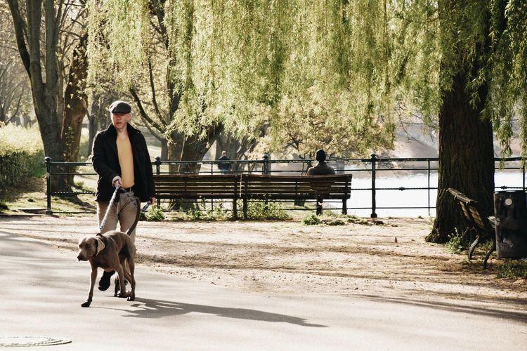 Man riding dog walking on street amidst trees