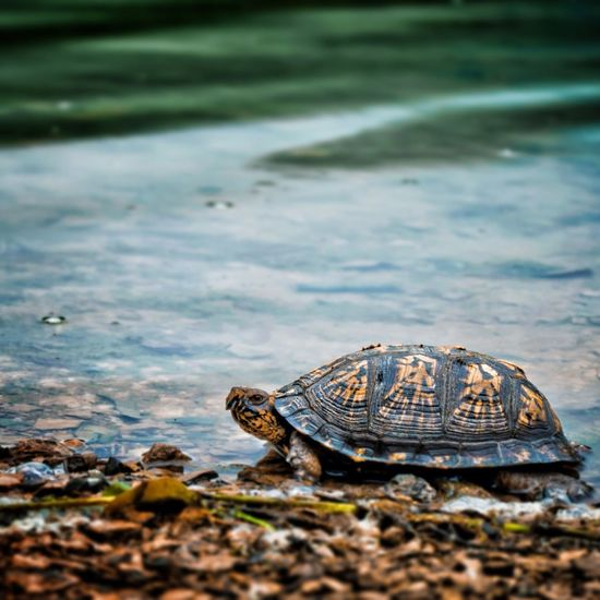 Nature Outdoors Lake Turtle