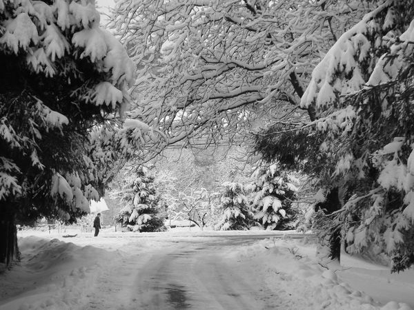 The kid... Winter Trees Nature Snow Tree Blackandwhite Cold Temperature Outdoors Beauty In Nature Real People Day Looking At Camera Like Winter Animal Themes