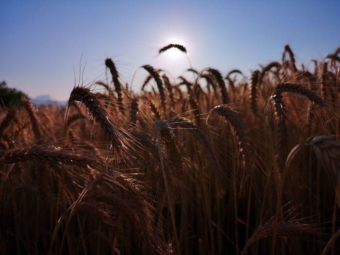 Nature Day Sun