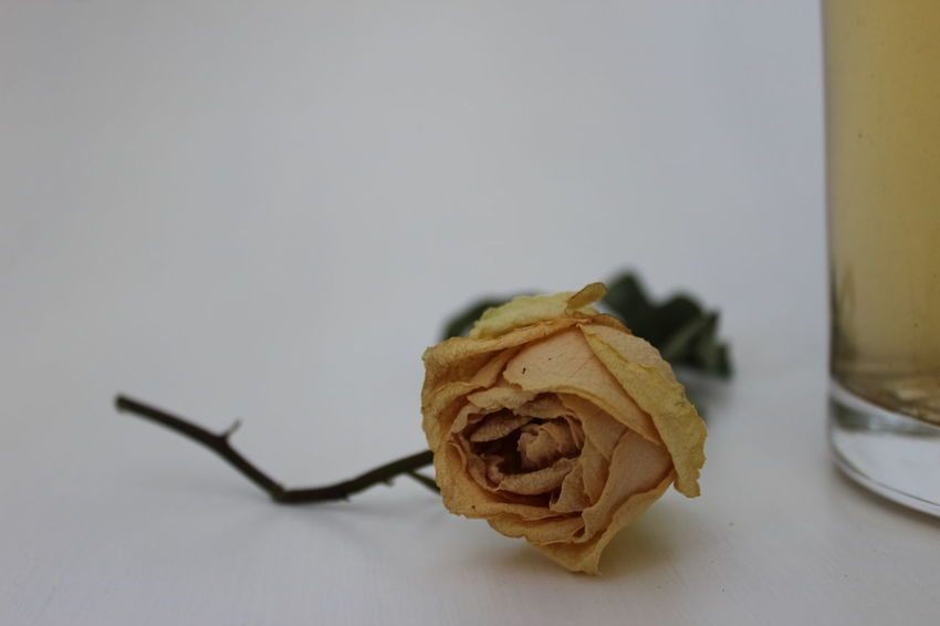 Close-up Dead Flowers Dead Leaves Flower Head Fragility Freshness Leaves Nature Rose Close Up Rose Petals Roses Selective Focus