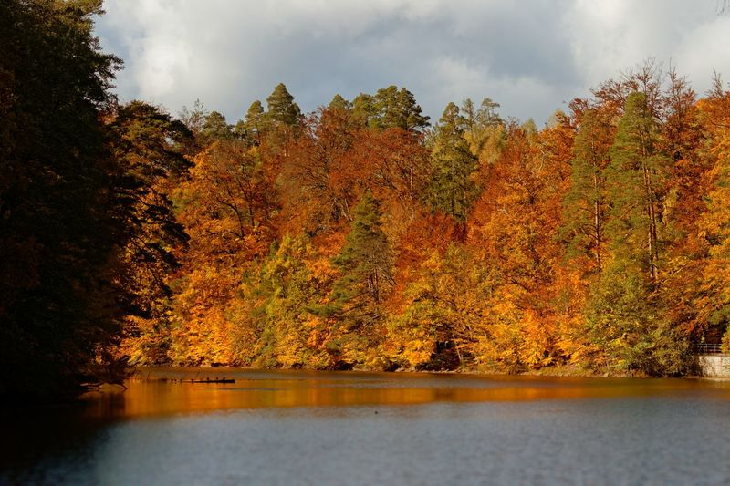 Scenic view of lake by trees against sky during autumn