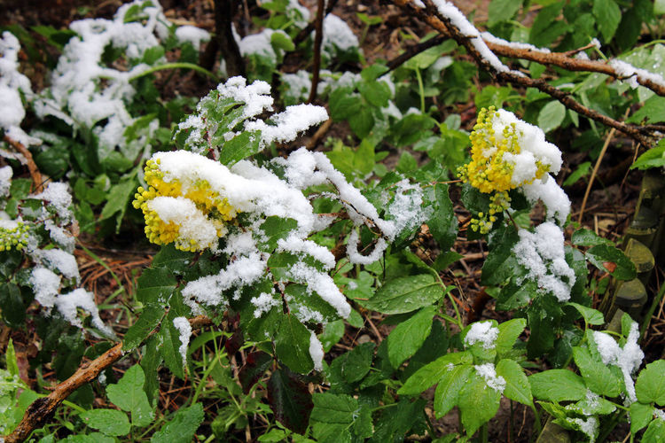 High angle view of white flowering plants on snow