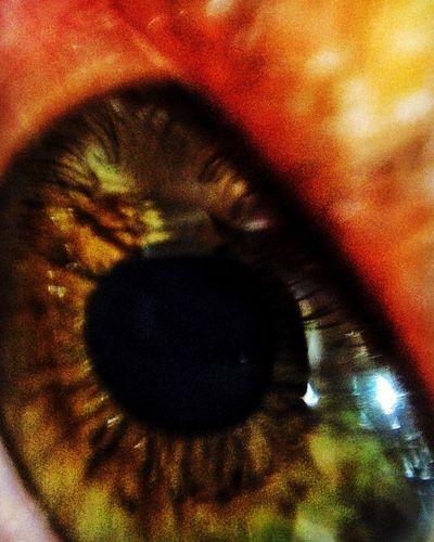 Eye em'