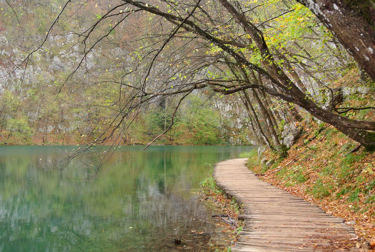 Park in autumn with green water lake, boardwalk laid along lakeside at Plitvice National Park in Croatia. Beautiful Green Lake Park In Autumn Peaceful View Plitvice Lakes National Park Quiet Places Tranquility Along The Lake Boardwalk Color Of Autumn Color Of Fall Park And Lake Plitvice National Park