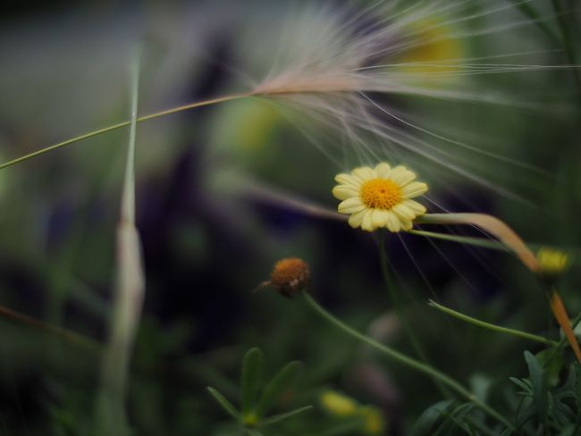 Grass and flower Flowers Flower Flowers,Plants & Garden Flowers, Nature And Beauty Nature Photography Nature On Your Doorstep Shallow Depth Of Field Selective Focus Grass And Flowers