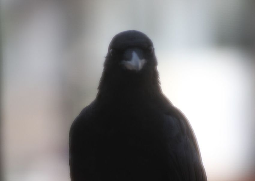 Animal Themes Animals In The Wild Bird Close-up Day Indoors  Mammal No People One Animal Silhouette