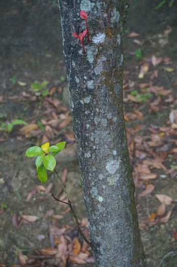 Close-up of plant growing on tree trunk