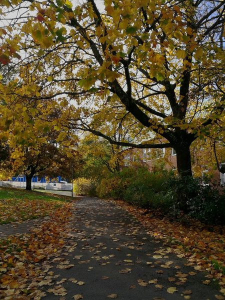 Autumn Tree No People Peaceful Nature Red Yellow Color Warmcolors Coldweather Göteborg Sweden