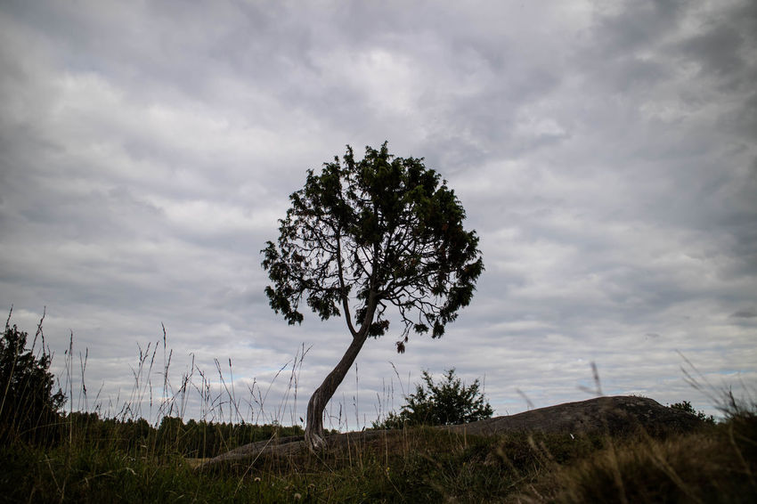 Beauty In Nature Cloud - Sky Day Grass Landscape Lone Nature No People Non-urban Scene Outdoors Scenics Sky Tranquil Scene Tranquility Tree Tree Trunk