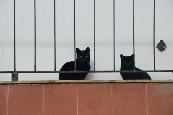 two black cats Black Cats Cat Domestic Animals Domestic Cat Feline Nature No People Pets Welcome To Black