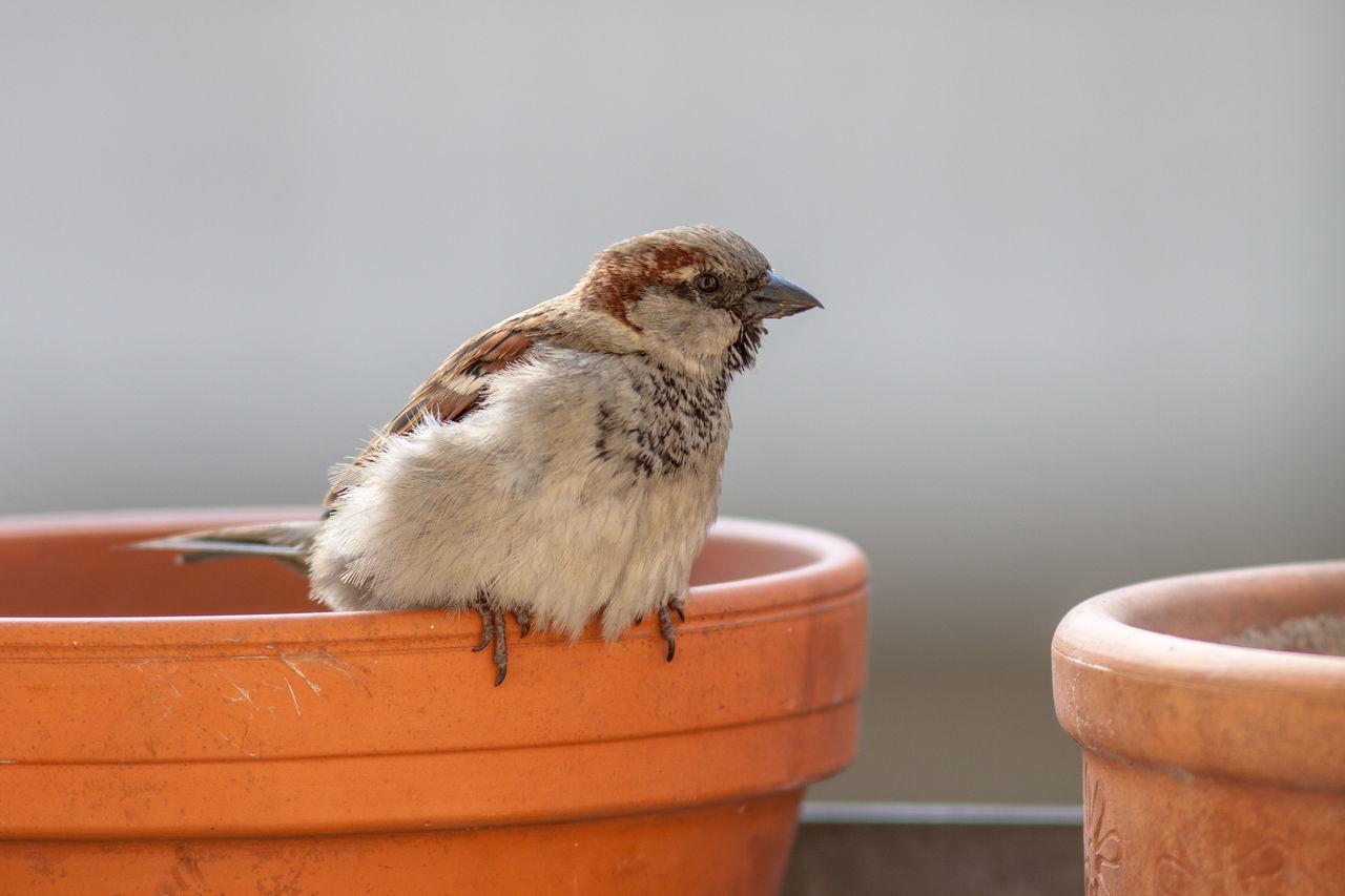 Close-up of bird perching on edge of birdbath
