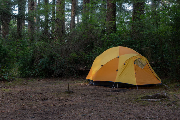 View of tent against trees in forest
