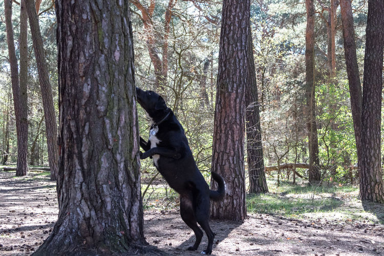 View of a dog on tree trunk